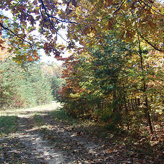 Forested 1/3 Acre Sanctuary Near center of Fairfield Glade - Image 1
