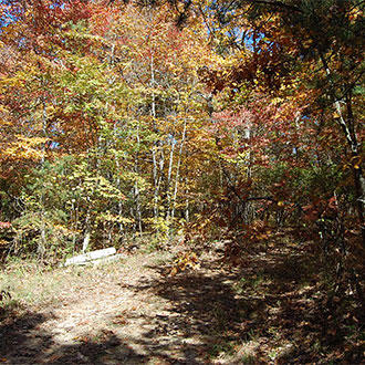 Forested 1/3 Acre Sanctuary Near center of Fairfield Glade - Image 3