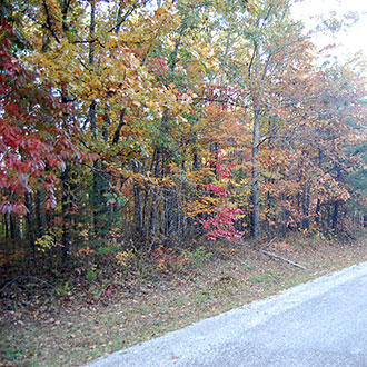 Beautiful Tennessee Wooded Property Near Saint George Lake - Image 1