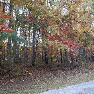 Beautiful Tennessee Wooded Property Near Saint George Lake - Image 3