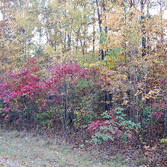 Beautiful Tennessee Wooded Property Near Saint George Lake - Image 4