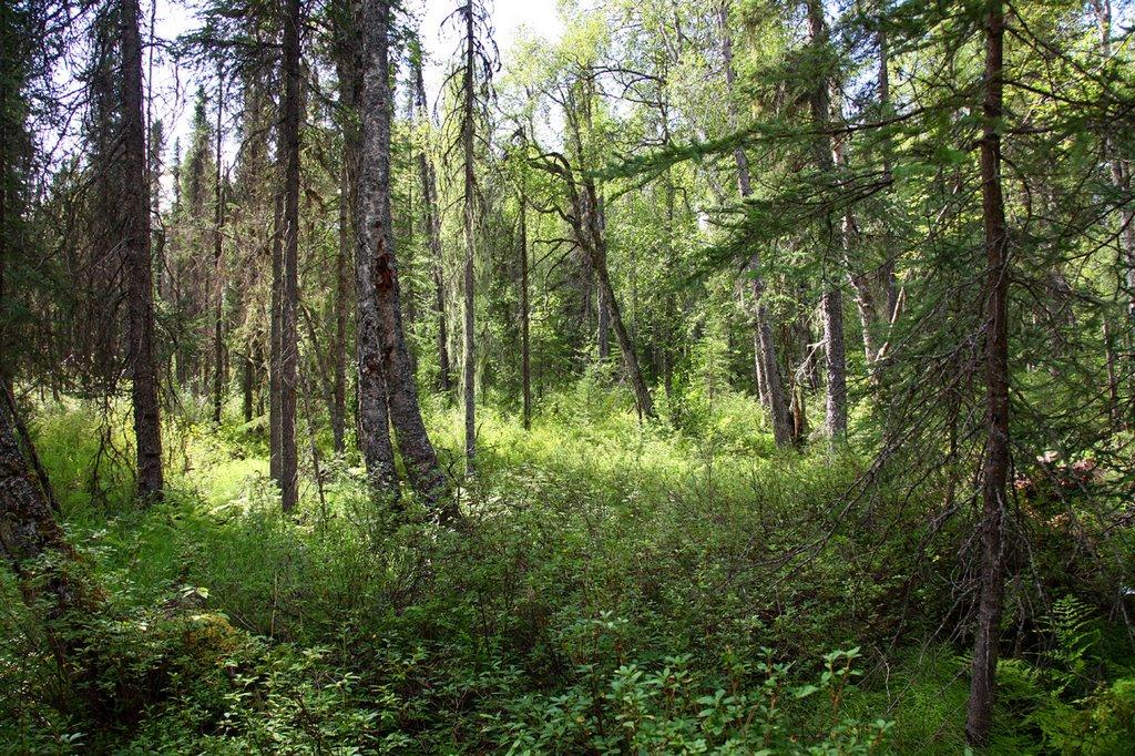 10+ Acre Wooded Property with Easement but No Road - Image 2