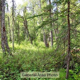10+ Acre Wooded Property with Easement but No Road - Image 1