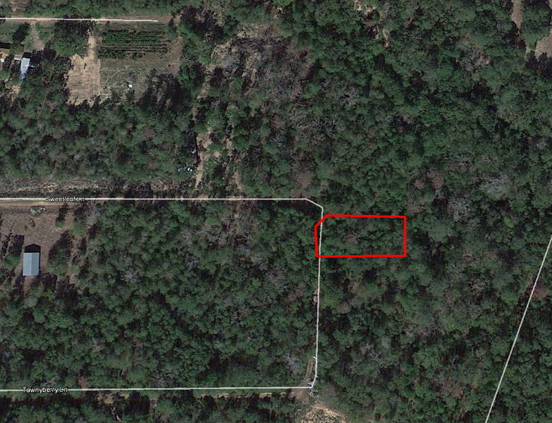 Tree-Covered Quarter Acre 90 Minutes from Houston - Image 2