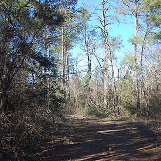 Tree-Covered Quarter Acre 90 Minutes from Houston - Image 4