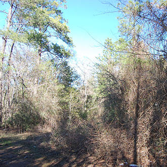 Tree-Covered Quarter Acre 90 Minutes from Houston - Image 1