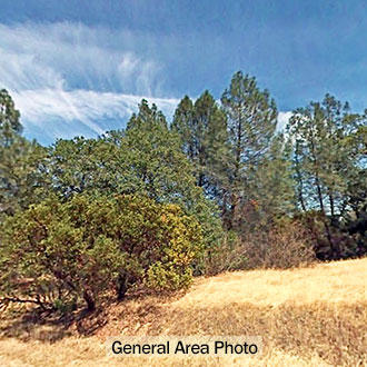 3+ Acre Residential Lot in Northern California - Image 4