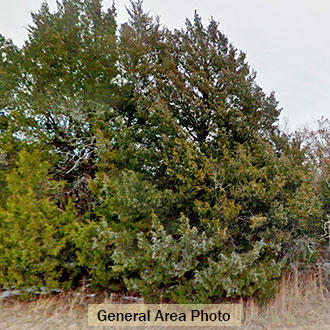 Nearly a quarter acre of treed property in Oklahoma resort area - Image 3