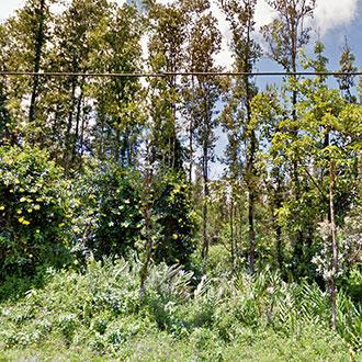 Hawaii Property in Nice Rural Neighborhood SE of Hilo - Image 0