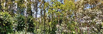 Hawaii Property in Nice Rural Neighborhood SE of Hilo