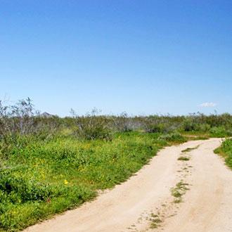 4+ Acre Rural Getaway Near Wittmann - Image 3