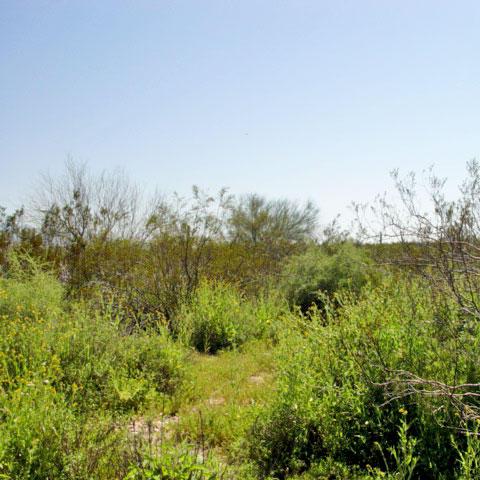 4+ Acre Rural Getaway Near Wittmann - Image 4