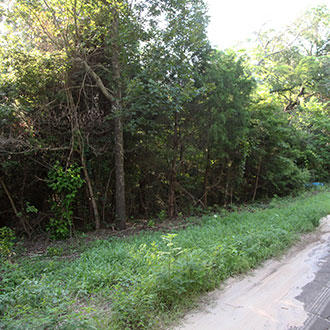 Wooded Property with Water and Electricity 90 Minutes from Dallas - Image 3