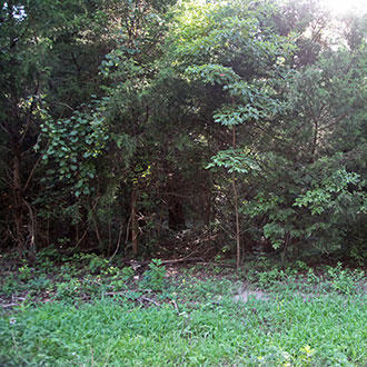 Wooded Property with Water and Electricity 90 Minutes from Dallas - Image 0