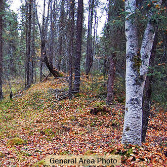 Many Lakes Close to this Wooded Alaska Property - Image 1