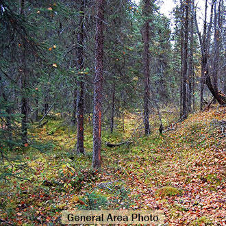 Many Lakes Close to this Wooded Alaska Property - Image 0