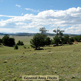 5+ acre Colorado Escape with Outdoor Recreation on all sides - Image 1