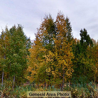 3/4 Acre Wooded Hideout North of Anchorage - Image 3
