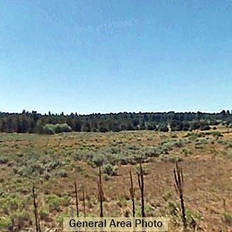 Gorgeous 2.5 Acre Escape 5 Miles from Dorris near the Oregon Border - Image 3