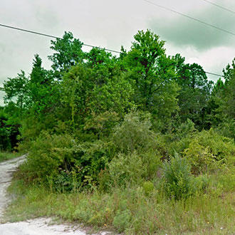 Quiet Florida Homesite, North of Tampa - Image 4