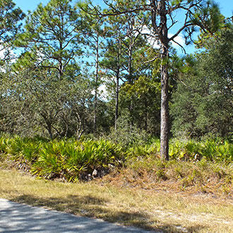 1+ Acre Rural Residential Property, Near Lake and Gulf Coast - Image 2