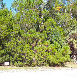 Florida Homesite Near the Gulf Coast - Image 4