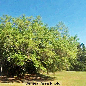 Multiple-Lot Commercial Property near the Suwannee River - Image 0
