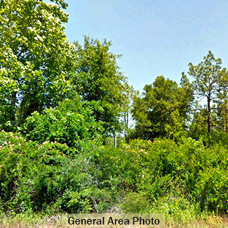 Corner Lot available in Fountain Florida - Image 3