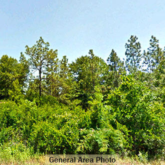Corner Lot available in Fountain Florida - Image 0