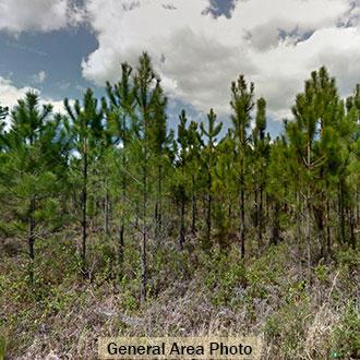 Quiet Living in North Florida - Image 0