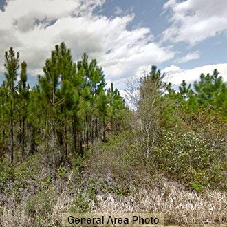 Quiet Living in North Florida - Image 2