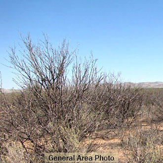 11 Acres of Flat Terrain in Culberson County - Image 3