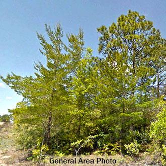 Residential Lot in Developing Community in Defuniak Springs - Image 3