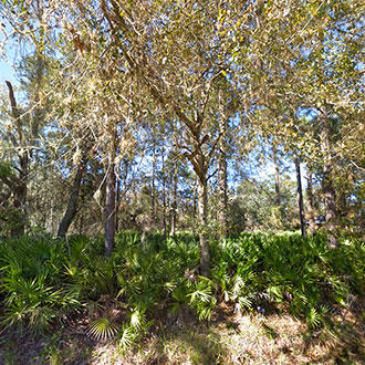 Great Corner Lot in East Palatka Florida - Image 1