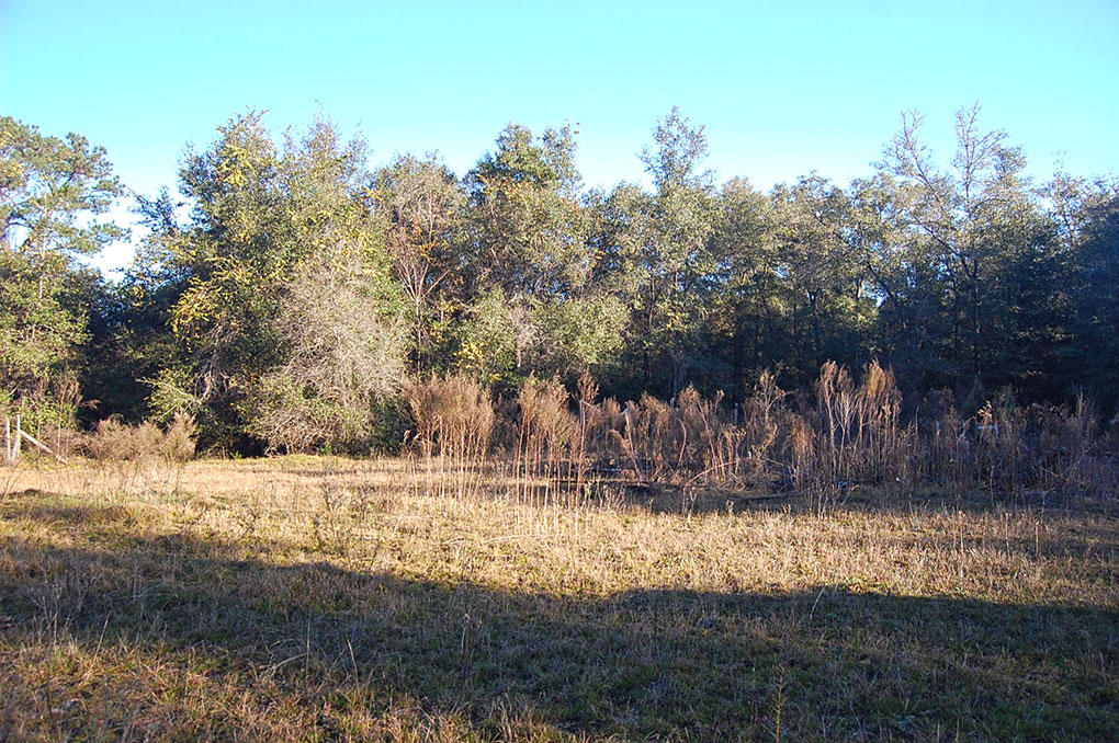 Lot in Interlachen with Well and Septic - Image 4