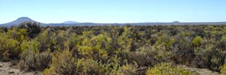 20 Acre Parcel Less than 11 Miles West of Christmas Valley