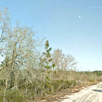 Half Acre Lot in Orange Blossom Manor - Image 1