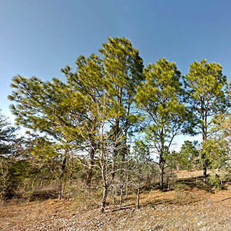 One and a Quarter Acre Lot in Morriston, Florida With Great Access - Image 1