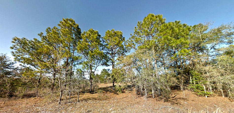 One and a Quarter Acre Lot in Morriston, Florida With Great Access - Image 3