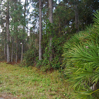 Lot On W Lake Drive In Deland FL - Image 1