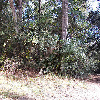Treed Lot Near Clearwater Lake - Image 0