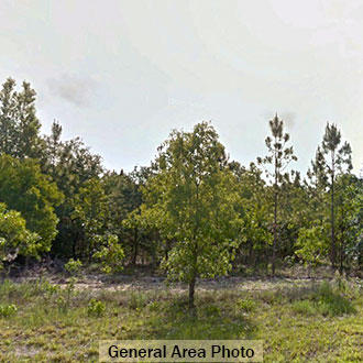 1+ Acre Florida Getaway in a Perfect Area for Boating & Fishing - Image 3