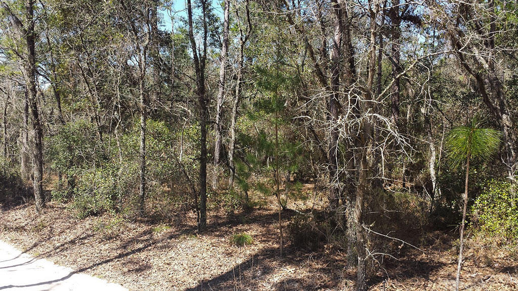 Tree Covered Acreage with Multiple Uses Possible - Image 2