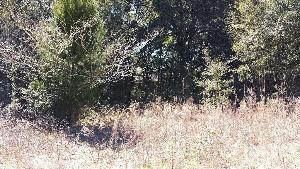 Quaint Residential Lot in Summerfield Florida - Image 3