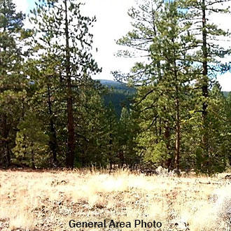 1 Acre Near Lush Woods and Soaring Mountains of Northern California - Image 2