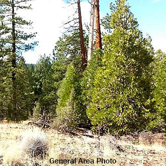 1 Acre Near Lush Woods and Soaring Mountains of Northern California - Image 1