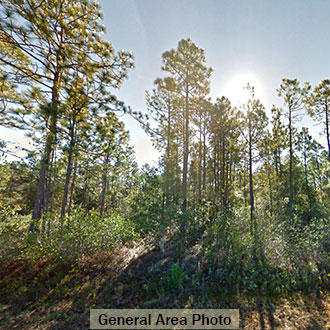 Private Treed Lot Near Boiling Spring Lakes - Image 1