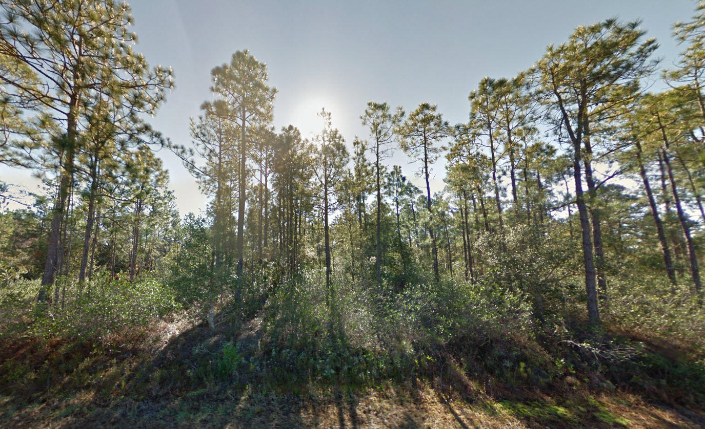 Private Treed Lot Near Boiling Spring Lakes - Image 4