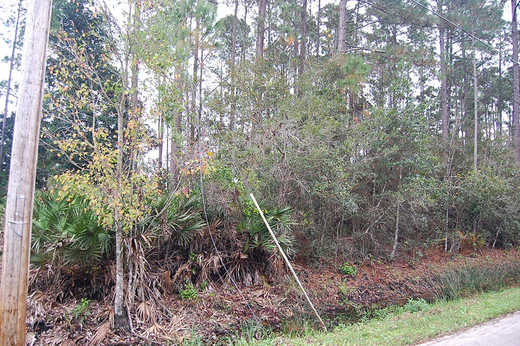 Nice Treed Property in East Palatka near St. Johns River - Image 3