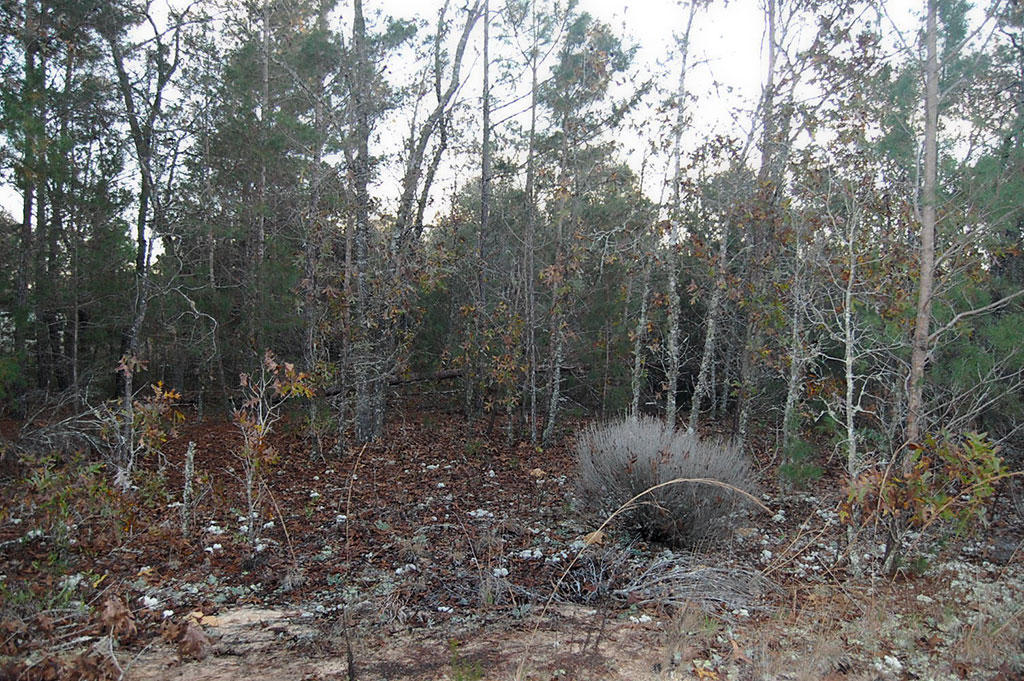 Over Half an Acre Residential Lot Near Lakes - Image 5